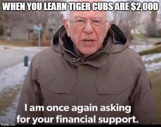 memes about netflix show tiger king